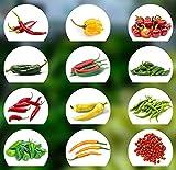 Cultivo fácil,Semillas de chile,12 tipos de semillas de chile,Desde calientes a suaves,Conjunto de cultivo con semillas de chile naturales de alta calidad,Cultivo para el jardín y el balcón-Una ración