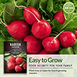 Survival Garden Seeds - Champion Radish Seed for Planting - Packet with Instructions to Plant and Grow in Your Home Vegetable Garden - Non-GMO Heirloom Variety