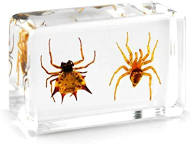 QTMY Biology Science World Collection of Real Insect Specimen Paperweight (2 Spiders)