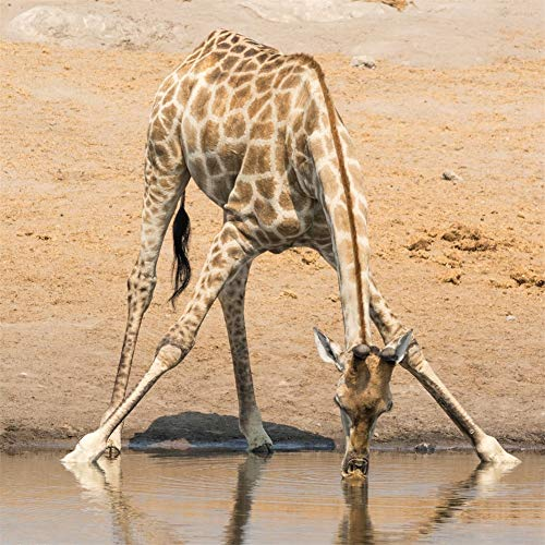 ROG000 5D Full DIY Full Painting Diamant Bohrer Riverside Animal Giraffe Diamond Malerei Handgemachtes Kristall Strass Wohnzimmer Dekor Wandkunst Handwerk 60x60cm W3252