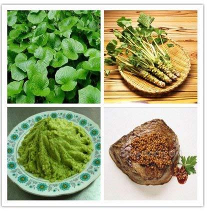 200 Stück/Packung Wasabi-Samen, japanische Meerrettich-Samen, Gemüsesamen, Bonsai-Pflanze, Heimwerker, Gartenpflanzen.