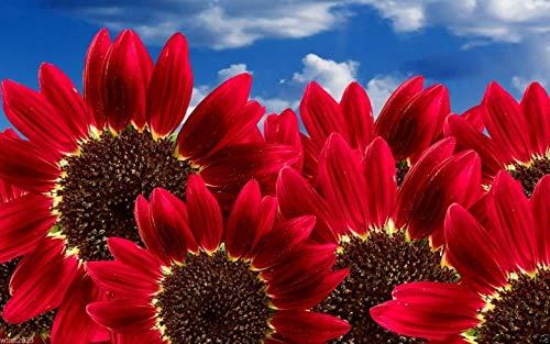 Seeds: Red s Seeds () Bio, Annual, Blumen
