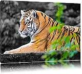 anmutiger Tiger auf Baumstamm schwarz/weiß auf Leinwand, XXL riesige Bilder fertig gerahmt mit Keilrahmen, Kunstdruck auf Wandbild mit Rahmen, günstiger als Gemälde oder Ölbild, kein Poster oder Plakat