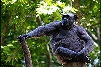 大人のためのA169ジグパズル1000ピース動物サル動物70x50cm