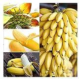 100 Unids Raras Semillas de Árboles de Banano Enano Mini Bonsai Semillas de Frutas Exóticas Plantas de Jardín