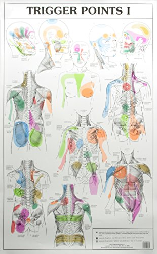 trigger point wall chart - 5