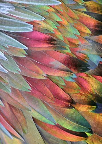 UIOLK Impresiones en Lienzo decoracin de Plumas Creativas Lienzo nrdico Pintura al leo Arte de la Pared impresin Cartel decoracin de la Pared Entrada de la Sala de Estar decoracin del hogar