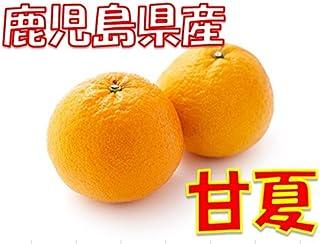 鹿児島県産 甘夏  1箱:5kg サイズ混合