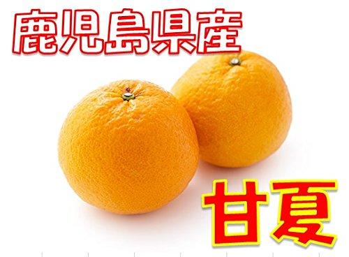 鹿児島県産 甘夏  1箱:10kg サイズ混合