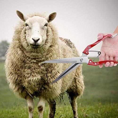 Omabeta Hoja Sheep Shear Sheep Sheep Shear Steel Sheep Clipper durable para la oveja cruzada lana adhesiva lana fina oveja