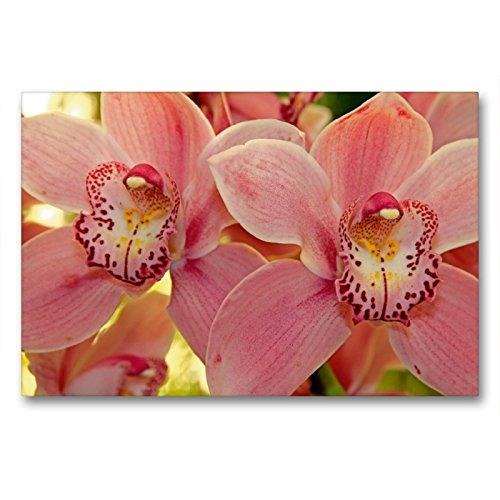 Premium Textil-Leinwand 90 x 60 cm Quer-Format Orchideen | Wandbild, HD-Bild auf Keilrahmen, Fertigbild auf hochwertigem Vlies, Leinwanddruck von Klaus Lielischkies
