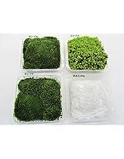 【 翔美苑 】 苔 テラリウム 用 お好みで選べる 苔 4種セット 少量欲しい方に
