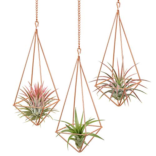 Air plant holder with chain