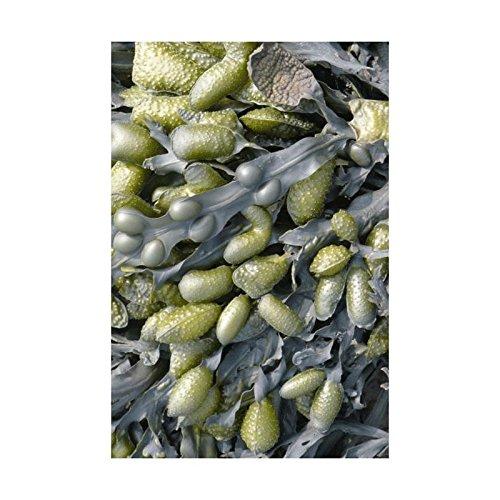 Moooi Carpets Sea Weed Teppich 200x300cm, grün