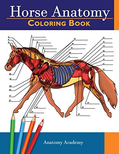 Horse Anatomy Coloring Book: Incredibly Detailed Self-Test Equine Anatomy Color workbook | Perfect Gift for Veterinary Students, Horse Lovers & ... Students, Horse Lovers & Adults