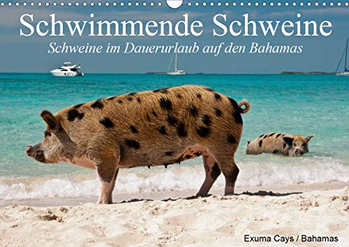 Schwimmende Schweine (Wandkalender 2021 DIN A3 quer)