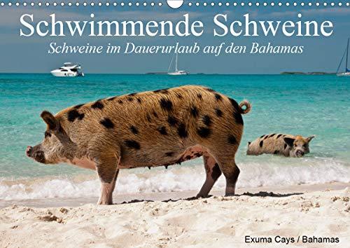 Schwimmende Schweine (Wandkalender 2020 DIN A3 quer)