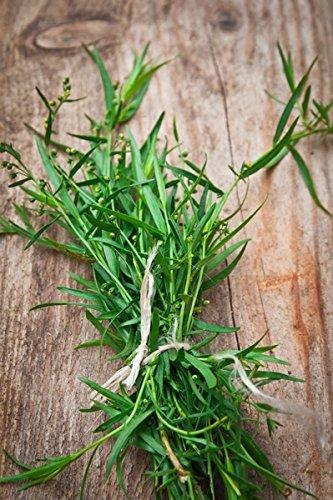 Semillas de estragón - Artemisia dracunculus