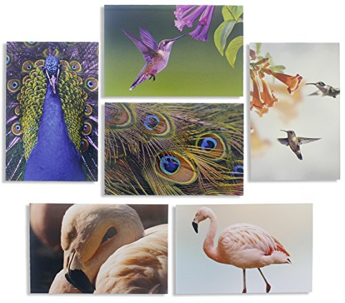 All Occasion Bulk Greeting Cards - Blank Inside - Bird Photographs with Peacocks, Hummingbirds, and Flamingos - Includes 48 Cards with Envelopes - 4 x 6 Inches