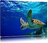 Schildkröte im Riff Format: 100x70 auf Leinwand, XXL