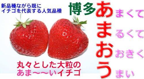 福岡県産 あまおう Gパック 2パック産地箱入 ご家庭用わけあり(規格外品)