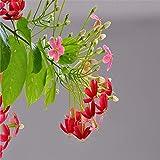 Aerlan Fleurs Graines ornementales pour Balcon,Horticulture Fleur Médicinale Quisqualis Linn Graine Famille Greening-100g,Graines de Parfum rares