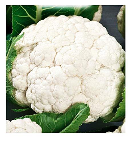 Schneeball blumenkohlsamen - früchte - mittelfrüh - blumenkohl - brassica oleracea - die besten pflanzensamen - blumen gemüse - selten - ca. 4400 samen - cf005