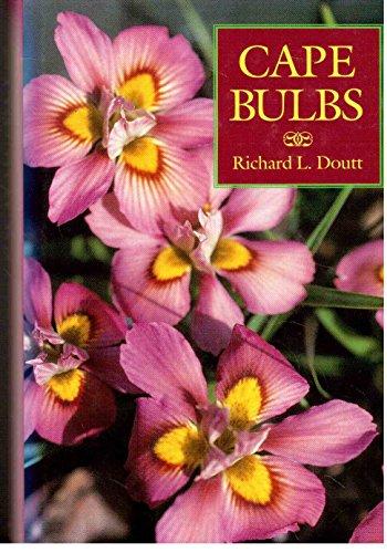 Cape Bulbs