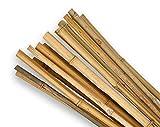 Cañas de bambú SupaGarden de 60 cm de alta calidad, extra fuertes, paquete de 20