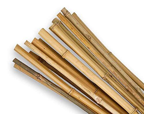 SupaGarden Pflanzenstütze, 61cm hoch, extrastark, hohe Qualität, Bambus, 20Stück