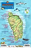 Dominica Dive Map & Coral Reef Creatures Guide Franko Maps Laminated Fish Card