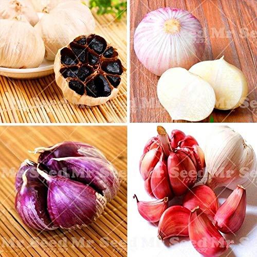 Portal Cool 100Pcs Knoblauch Samen Bio-Saatgut Gemüse Küche Würzen von Speisen