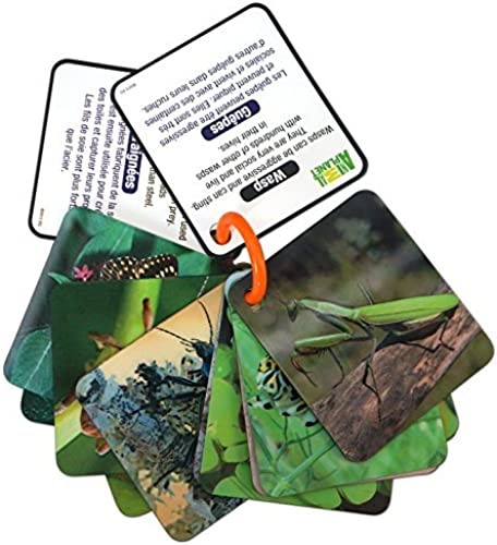 Animal Planet 3D Flash Cards - Bugs by Animal Planet