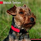welsh terrier 2014 wall calendar