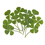 AUEAR, 12 Pack Four-Leaf Pressed Dried Flowers Natural Clover Leaf for DIY Jewelry Making DIY Resin Art Craft
