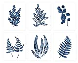 Pink Pixie Studio Blue Ink Botanical Fern Eucalyptus Foliage Prints 8x10 Set of 6 UNFRAMED Watercolor Indigo Navy Leaf Wall Art Canvas Posters Painting Home Office Decor