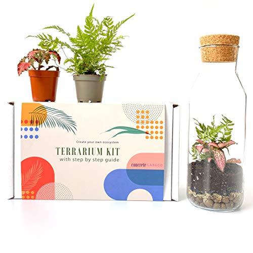 Terrarium Kit mit Glasbehälter & Korkdeckel, Mini Garten, Geschenkidee, DIY Kit (Kit mit Farn & Fittonia)