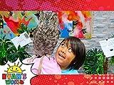 Ryan Meets a Pet Owl!
