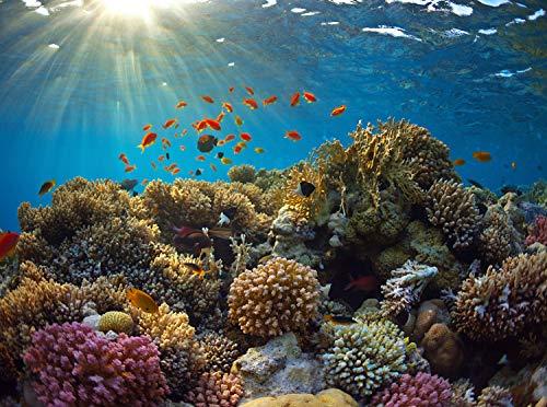 wandmotiv24 Fototapete Korallenriff Größe: 350 x 260 cm Wandbild, Motivtapete, Vlietapete KTk481