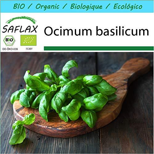 SAFLAX - Kit cadeau - BIO - Basilic - Génois - 800 graines - Avec boîte cadeau/d'expédition, autocollant d'expédition, carte cadeau et substrat de culture - Ocimum basilicum