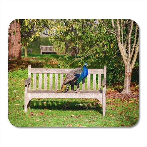 Mauspads Animal Blue Exotic Indian Peafowl auf Parkbank Garden Mouse Pad für Notebooks, Desktop-Computer Matten Büromaterial