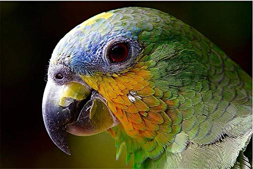 Rompecabezas De 1000 Piezas Loro Guacamayo Pájaro Amazon Cabeza para Amigo Adulto