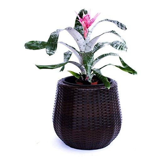 Pflanzkübel Blumenkübel Blumentopf rund konisch Polyrattan D52xH44cm coffee braun.