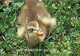 Laufentenküken - Sunny (Wandkalender 2020 DIN A2 quer): LoRo-Artwork (Monatskalender, 14 Seiten ) (CALVENDO Natur)