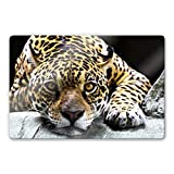 Glasbild Jaguar Raubtier Flecken Katze Tier Wall-Art - 100x70 cm
