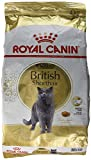 Royal Canin Breed Nutrition British Shorthair 34 - Croquettes 4 kg