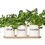 Dibor Indoor Herb Garden Kit - Window Box Balcony Herb Planter