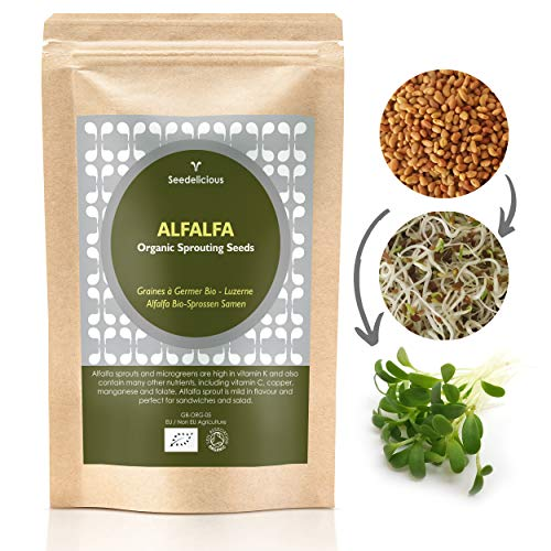 Seedelicious Alfalfa Bio-Sprossen-Samen - Hohe Keimfähigkeit Alfalfasamen zu Mikrogrüns- Schnell wachsendes Sprossen Superfood für besonders gesunde Ernährung | 500g