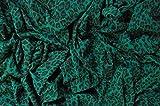 Brunswick Mills - Tela de punto sencilla con estampado de leopardo verde, estilo punk, suave y elástica, 98% de algodón y 2% de elastano, 160cm de ancho, por metro