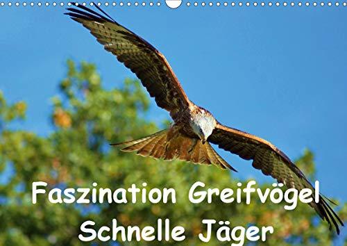 Faszination Greifvögel Schnelle Jäger (Wandkalender 2021 DIN A3 quer)